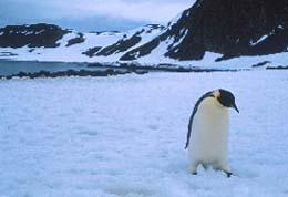 20061229205707-pinguino.jpg