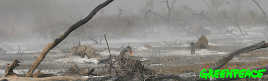 20070124011550-bosque-burn.jpg