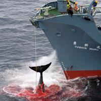 20071222181921-ballenas.jpg