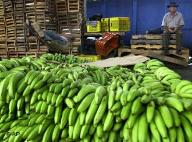 20080930021955-banana.jpg