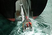 Las grandes ballenas del planeta están en peligro