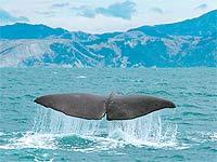 20071124191055-ballenas.jpg