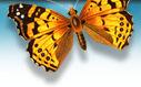 20090810202642-mariposa.jpg