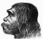 La separación del Neandertal y del Homo sapiens pudo producirse 500.000 años antes de lo que se creía
