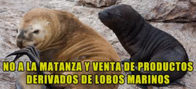 20120331013109-no-venta-lobos-marinos.jpg