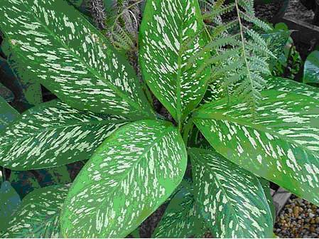 20120421013915-planta.jpg